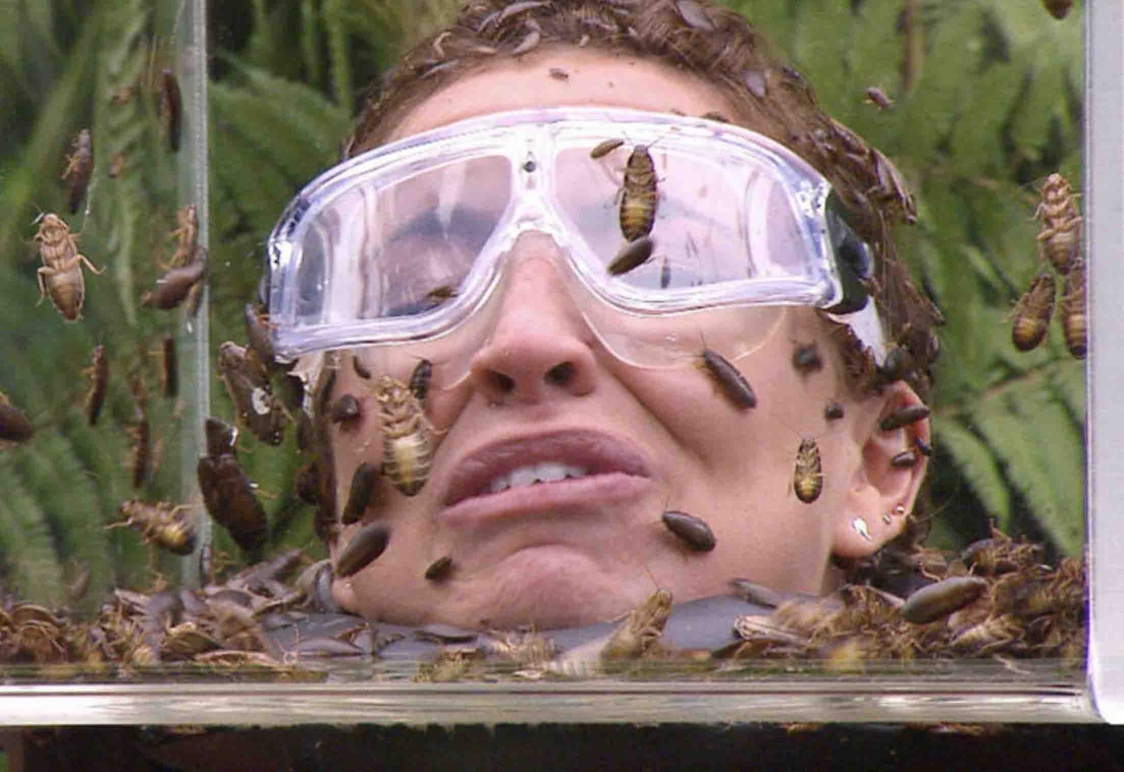 I'm a Celebrity 2018 Bushtucker Trial: who has been ...