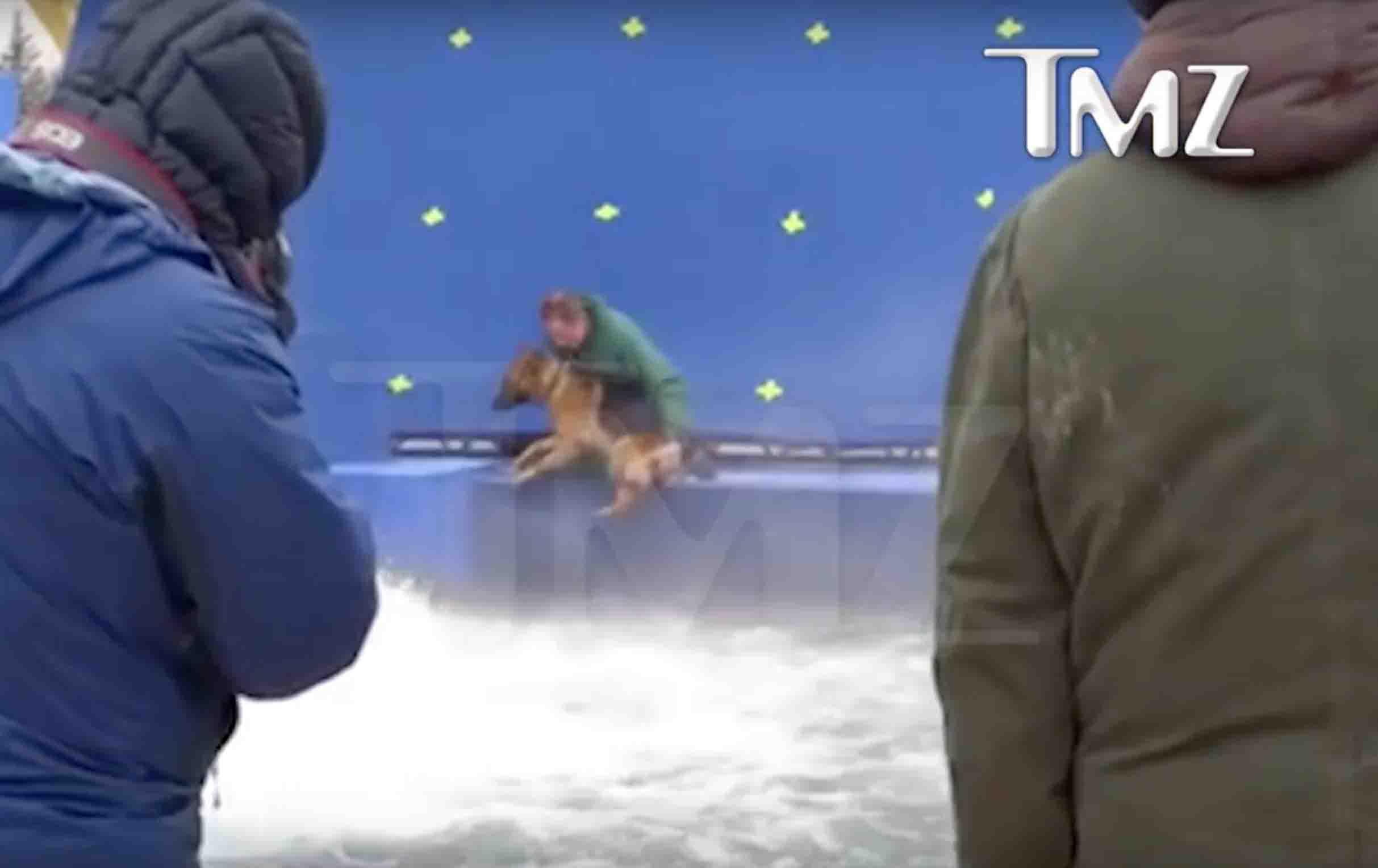 Tmz Video A Dog S Purpose